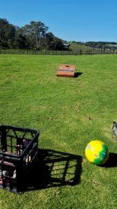 Cornhole and soccer ball at Angove